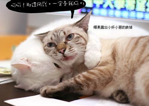 奶茶的大小事-可爱猫咪博客